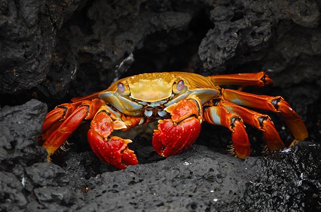 Crabe sur des rochers