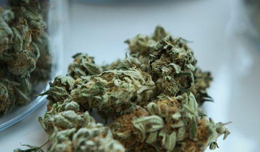 Cannabis et marijuana dans un laboratoire