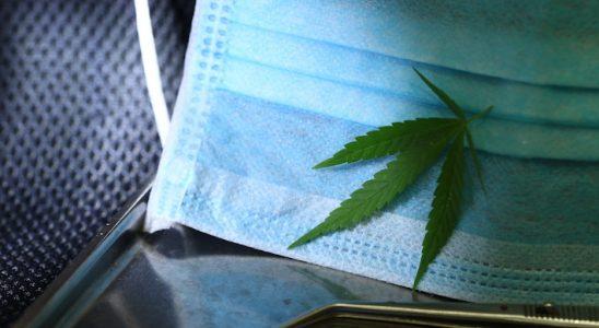 Le cannabis pendant le covid