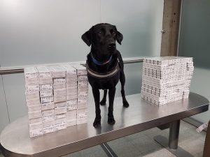 Douanes : Trophée bien mérité pour un attelage de chiens à la recherche de tabac de contrebande